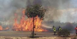 Prevenzione incendi. Pubblicata l'Ordinanza che impone la manutenzione dei terreni a rischio