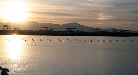 La Laguna di Santa Gilla a Cagliari